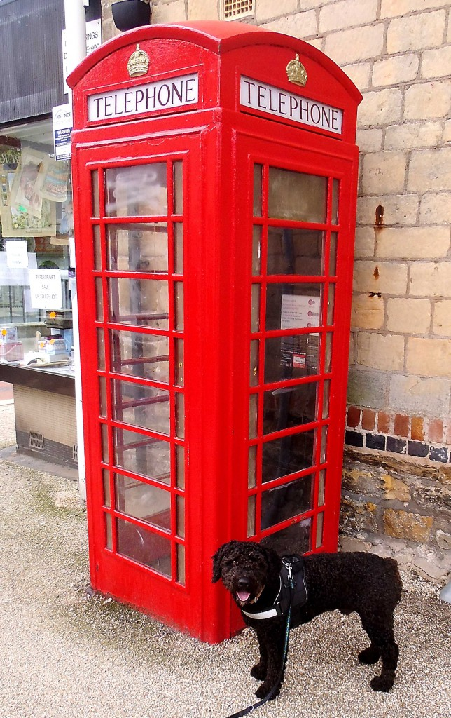 chico's adventures: chico vor einer englischen Telefonzelle